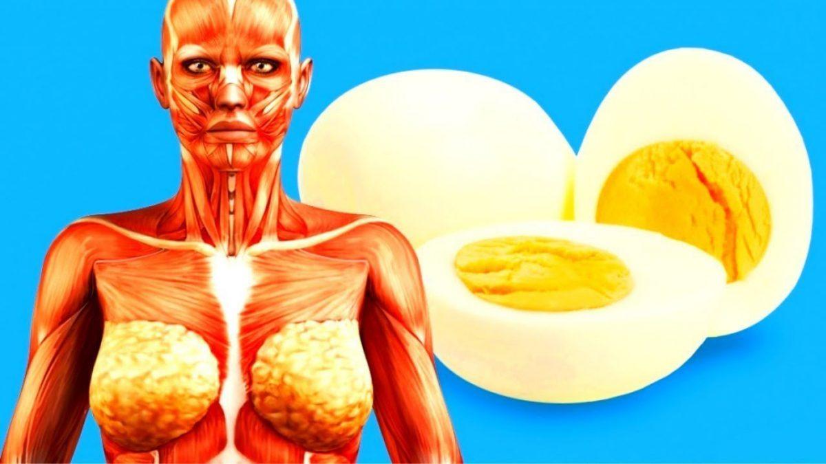 Что случится с телом, если есть по 2 яйца в день?