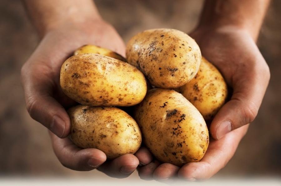 Засуньте картофель в обувь — вы удивитесь эффекту!
