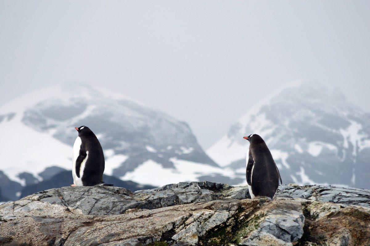 Пингвин или горящая спичка? Что увидели первым? Тест на отношение к жизни