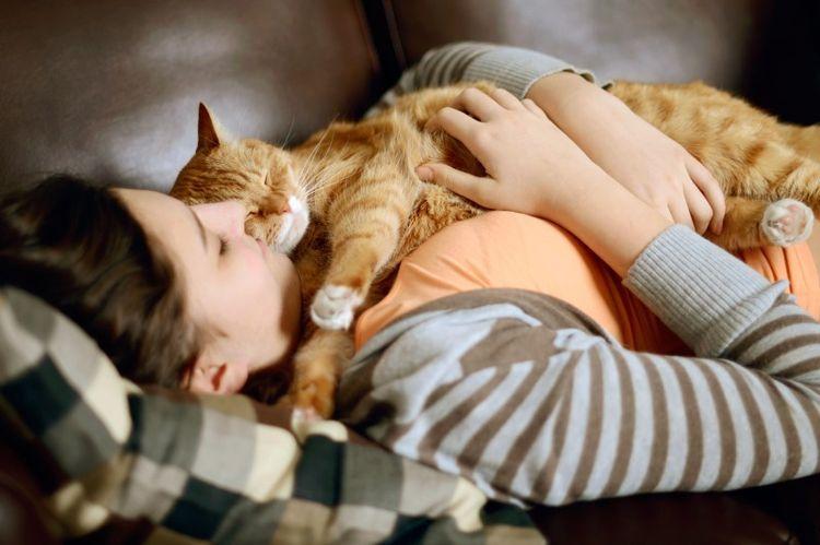 Почему кот ложиться спать на человека и что значат его позы